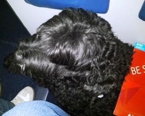 Anna on the Delta B737 Flight Salt Lake City, Utah to San Diego, California. DL1909!