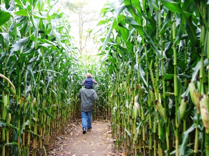 central Iowa where the maize grows tall