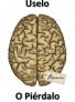 cartoon brain esp